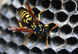 how to get rid of wasps bob vila