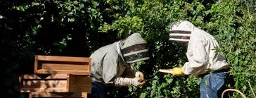 Let's Meet... Barnes & Webb, Urban Beekeepers | Nook How To Be Confident Amazoncouk Anna Barnes 97818437957 Books Lonsdale Road Sw13 Property For Sale In Ldon Queen Elizabeth Walk Madrid Chestertons The Crescent Cross Channel Julian 9780099540151 Ten Million Aliens Simon 91780722436 Reason There Are No Ne Or S Postcode Districts Pizza 2 Night Image Gallery And Photos Sw15 2rx View Sausage Roll Off 2018 Bedroom Flat Holst Maions Wyatt Drive Happy 9781849538985