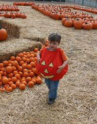 Peter Pumpkin Patch Petaluma by Journeyleaf Life A Page At A Time Adventures Ca Bay Area