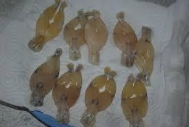 cuisiner des cuisses de grenouilles surgel馥s cuisses de grenouille à la provençale balade gourmande de cécile