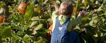 Maryland Pumpkin Patch by Pumpkin Harvest Days Butler U0027s Orchardbutler U0027s Orchard