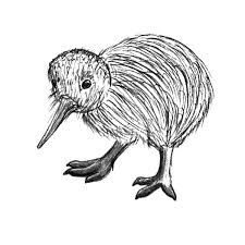 Kiwi Bird Chick Coloring Pages PagesFull Size Image