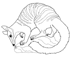 Numbat Coloring Page Template