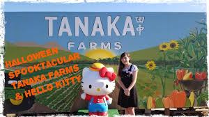 Tanaka Farms Pumpkin Patch by Chloe Irl Halloween Spooktacular 29 Tanaka Farms And