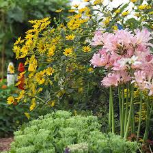 the best summer bulbs late summer plants and gardens