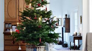Aspirin Keep Christmas Trees Alive by How To Keep Christmas Tree Fresh Trees Shrubs U0026 Landscaping
