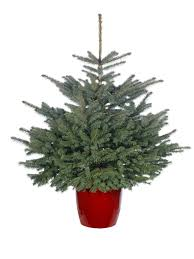 Best Type Of Christmas Tree by Buy Your Christmas Tree From The Royal Parks The Royal Parks