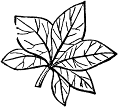 Green leaf clipart free vector for free about free 2