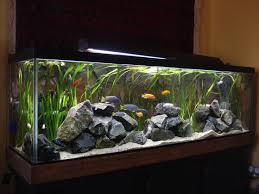 large aquarium rocks for sale best 25 cichlid aquarium ideas on tropical fish