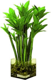 Best Plant For Bathroom by Artificial Plants For Bathroom