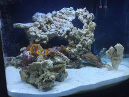 Post Your Modern Aquascape - Reef Central Online Community Is This Aquascape Ok Aquarium Advice Forum Community Reefcleaners Rock Aquascaping Contest Live Rocks In Your Saltwater Post Your Modern Aquascape Reef Central Online There A Science To Live Rock Sanctuary 90 Gallon Build Update 9 Youtube Page 3 The Tank Show Skills 16 How Care What Makes Great Large Custom Living Coral Aquariums Nyc