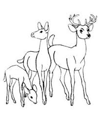 Baby Deer Coloring Pages 38