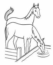 Horses At Water Trough