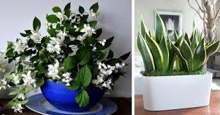 dormir avec une plante dans la chambre les 5 plantes parfaites pour la chambre à coucher dormez mieux
