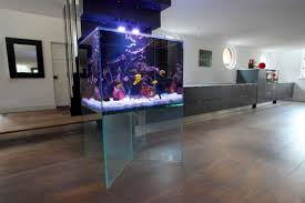 what do i need to before getting an aquarium homify