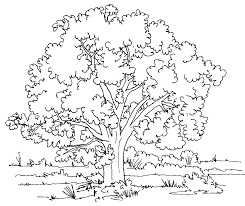 Coloring Page Pages Tree Trees And Leaves With Roots Fu Tom Or