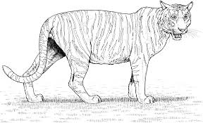Free Printable Tiger Coloring Pages For Kids New Of Tigers