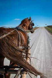 14 Best Kalona, Iowa Images On Pinterest | Kalona Iowa, Amish And ... Amish Horses April 2016 For Sale Featured Listings Kalona Homes For Property Search In Single Familyacreage Sale Iowa 20173679 Tours Chamber September 2014 Ia Horse Auction Pictures Of Amana Colonies Day Trip To Girl On The Go
