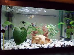 plante artificielle pour aquarium plante pour aquarium en soie hydrocotyle plantes artificielles