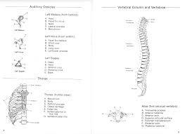 100 Arch D Carolina Biological Supply Company Human Anatomy Manual The Skeleton