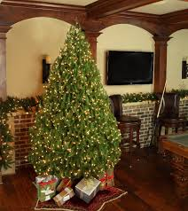 Christmas Trees Types by Different Types Of Christmas Trees In Your Home