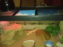 African Dwarf Frog Shedding Behavior by We U0027ve Had Our Gecko About 4 Years Nothing New Has Changed He