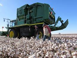 Cotton: Kansas' Forgotten Crop Ginning Up Interest Kansas Motor Carriers Association Afilliated With The American 29th Annual Pcc Scholarship Auction Book Pages 1 20 Text Version Withers Awarded 30th Boyd Davies Executiveinresidence Pratt Southwest Truck Parts Inc Home Facebook Lyonsblythe Named Americas Farmers Mom Of Year Trucking Companies Starting S 2001 Chevrolet C7500 Feed Delivery Truck Item Aj9344 Sol Caterpillar Equipment Dealer For And Missouri Lonnie Saloga Drilling Manager Sterling Linkedin Photos Hot Cold Big Rig Show Big Hit Crowd