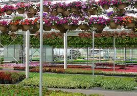Berns Garden Center Trees Plants Shrubs Flowers