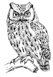 Coloring Pages Difficult Animals Of Owls For Adults Bestofcoloring