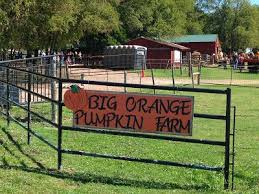 Big Orange Pumpkin Patch Celina Texas by 51 Best Pumpkin Farms Images On Pinterest Pumpkin Farm Pumpkins