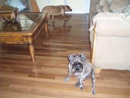 Hardwood Floor Spline Glue by 5 16