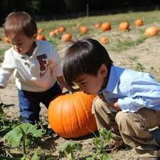 Piedmont Service Center Pumpkin Patch by Smith U0027s Nursery