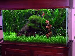 interior designs ideas corner fish tanks aquariums acrylic tank