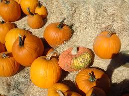 Pumpkin Patches In Phoenix Az 2013 by Halloween Events In Scottsdale U2013 2017 Scottsdale Az Real Estate