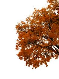 764 Autumn Tree Cutout 03 by Tigers stock