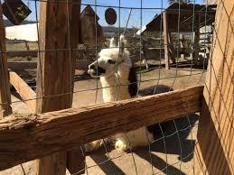 Visalia Pumpkin Patch by Petting Zoo Bravo Farms