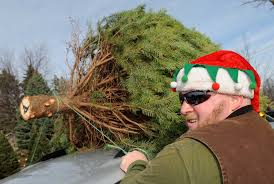 Xmas Tree Farms Albany Ny by Time To Cut A Tree For Christmas Times Union