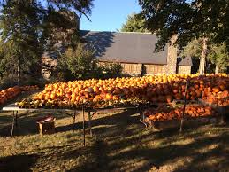 Mccall Pumpkin Patch 2017 by The Pumpkin Patch Second Congregational Church Of Winchester