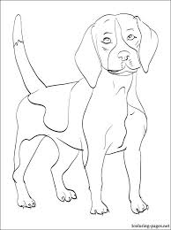 560x750 Beagle Coloring Pages Dog Page Realistic