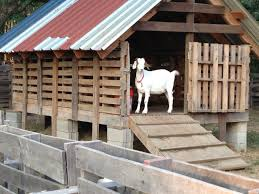 Goat Barn, Pallets | For The Farm | Pinterest | Goat Barn, Goats ... Small Pole Barn Plans Img Cost To Build House With Loft Sy Sheds Scle Goat Barn Ideas Best 25 Diy Pole On Pinterest Wood Shed Big Sheds Building A Part 2 Such And And Pasture Dairy Info Your Online Frame Idea For Pavilion Outside At The Farm Shed Designs Beautiful Garden Package Shelter Miniature Donkeys Or Goats Homestead Revival Planning The Homes Pictures Free For Dsc Style