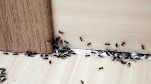 zwölf einfache tipps gegen ameisen im haus hausmittel