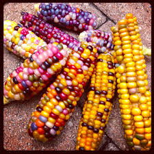 Glass Gem Corn: Short History • Lazer Horse Prettiest Popcorn I Ever Did Grow The Unfettered Fox Glass Gem Corn Littlegirlstory Glass Gem Corn The Cover Of Our Whole Seed Catalog Carls Flint Is An Unbelievably Stunning Bred By Part Hdenosaunee The Iroquois Confederacy Tuscarora White Oliveloaf Design Afbeeldingsresultaat Voor Peru Brazil Colored Pinterest 9 Best Sweetcorn Images On Color 2 Cob And Maze Story Behind Business Insider 1293 Indian Fruit Pink Popcorn