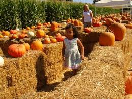 The Colony Tx Pumpkin Patch by The 25 Best Pumpkin Patch Locations Ideas On Pinterest Family