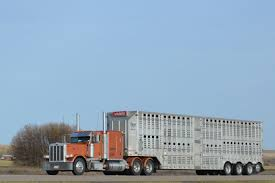 Trucking | Cattle Haulers XXX | Pinterest On The Road In South Dakota Pt 6 Home West Land Livestock Inc Trucking Haulers Pinterest Sale Llc Kenworth T800 With 4 Axle Bullwagon Tr Flickr What Are We Gonna Do With Them Hauling Industry Hams T908 Transports Mean Looking Marbert Transport Freight Ontario American Truck Simulator Peterbilt 389 Youtube Steve Yohn Livestock Trucking Horse Sales Agricultural Service Livestockcattle Gallery Transportation Is Important Part Of Cattle Through