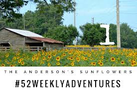 A Visit To The Anderson's Sunflowers Big Barn Harleydavidson 2302 Columbus Avenue Anderson In Remax Real Estate Solutions Fort Kent Tire Marshalling Area Finished My Lakeland Now 1981 Cx500 Custom For Sale 711 Original Miles Original Title 765 6423395 Barn Tour Summer 2016 Youtube All Weather 82019 Car Release Specs Price Sizes Kubota Tractor Gets Junk Yard China Tiresrims Drilled To Fit Coolest Find Survivor Ever Mint 1971 Dodge Charger Se Hot New England Zen The 2013 Pettengill Vintage Bazaar Motorcycle Show