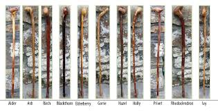 irish walking sticks and canes specialty blackthorn decorative