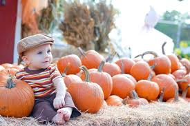 2015 Pumpkin Patches In Austin And Beyond | Free Fun In Austin Baby Austin Red Barn Nursery Pumpkin Patch Best 2017 25 Painted Cribs Ideas On Pinterest Rustic Nursery Wood Bonney Lassie A Visit To Mcauliffes Garden Center Make Your Yard The Envy Of Corn Poppies 2015 Patches In Austin And Beyond Free Fun In Greenhouse Geerlings