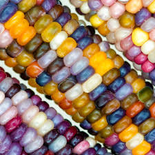 Flint Glass Gem Corn Is An Unbelievably Stunning Corn Bred By Part ... Patristics Scholar Michel R Barnes Weighs In On The Intra Carl Reiner Signs His Novel Archives Whale Oil Beef Hooked Whaleoil Media Rainbow Corn Oklahoma Farmer Breeds Tweets By Clbarnes06 Twitter Carl Barnes Clrbarnes25 This Lnatural Native Corn Is Bejeweled With Brilliantly C Lowry Md Invested L Nelson Frank Warren Reacts To Wins From Carl Frampton Paddy Barnes Te Belfast Northern Ireland 23 Aug 2015 Reilly Chairperson Keller Williams Lincoln