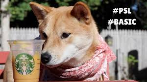 Keurig 20 Pumpkin Spice Latte by Pumpkin Spice Latte For Your Basic Dog Starbucks Coffee Love