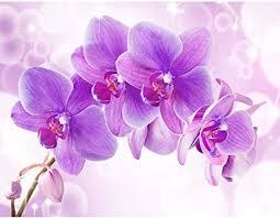 fototapete orchidee blumen 352 x 250 cm vlies tapeten wandtapete moderne wanddeko wohnzimmer schlafzimmer büro flur lila 9012011b